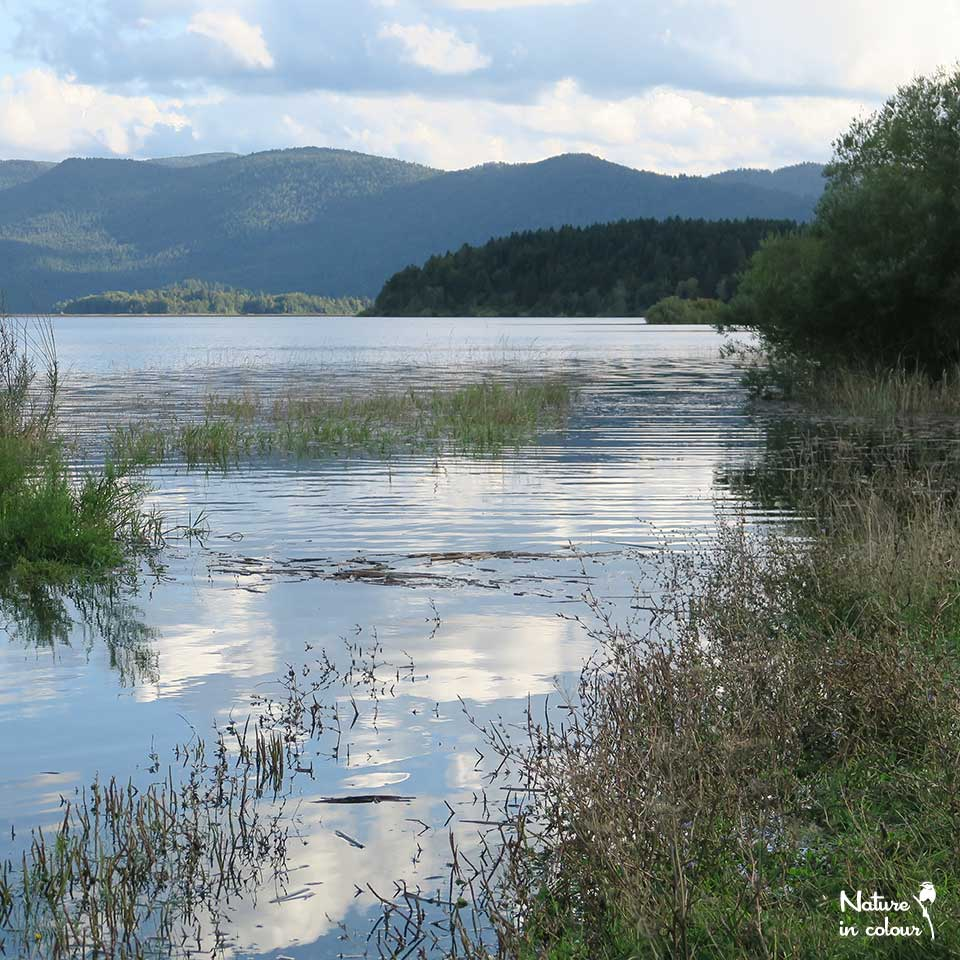 Lake Cerknica, when there is water.