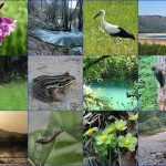 Magical-springs-of-lake-Cerknica-one-day-tour-in-Slovenia
