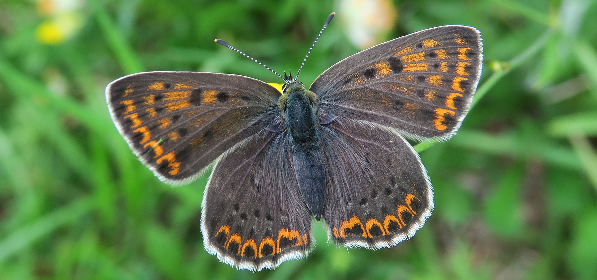 Join the Butterfly Tour in Slovenia, by Nature in Colour