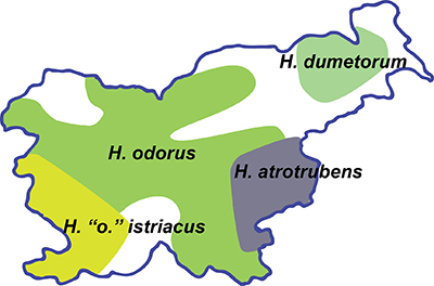 Distribution of Helleborus species in Slovenia