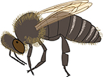 Honeybees are not agressive, but beestings can be a problem if you are alergic to them.