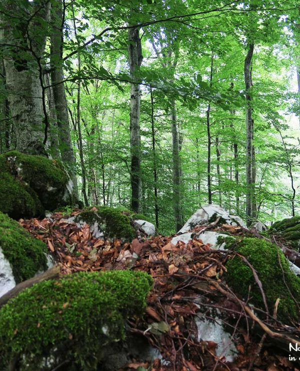 The Great Kočevje Forest - and this is just the ordinary part. Just wait until you see the Primaeval Forest Reserve!