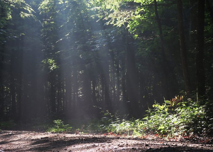 The vast Dinaric forest in Slovenia
