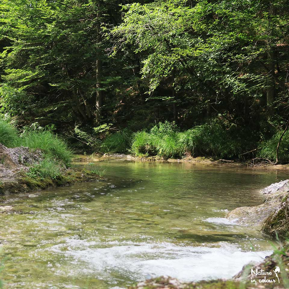 The Hidden Stream in southern Slovenia.