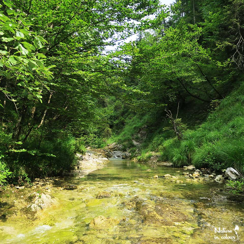 Join our hike Along the Hidden Stream in Slovenia