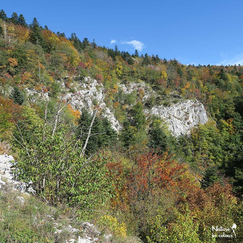 At a rocky outcropping, the Slovenian forest shows its autumn colours.