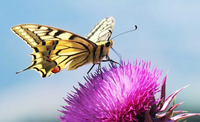 Flower and butterfly tour in Slovenia