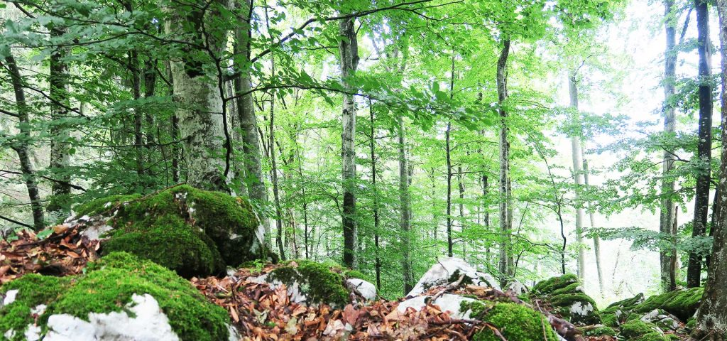 Join us Into the Forest on our one-day tour in Slovenia