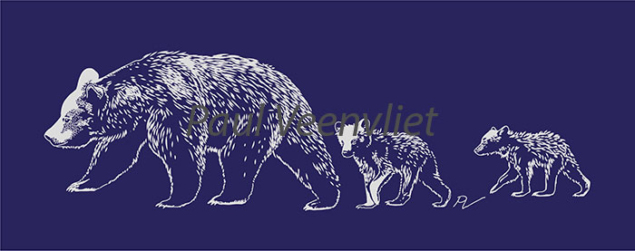 Original artwork for our bear-friendly mugs and shirts, drawings by Paul Veenvliet, (tour guide and organiser at Nature in colour)