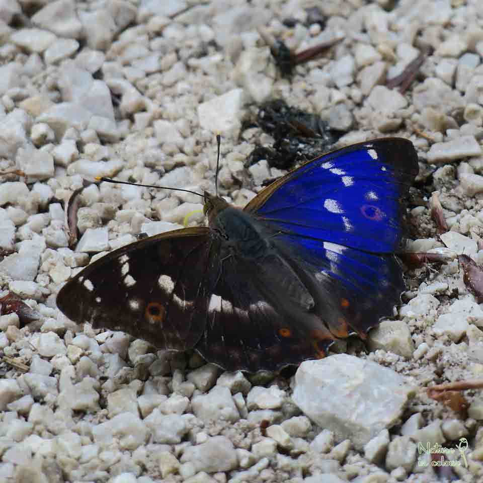 Butterfly and flower tour Slovenia
