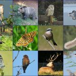 Nature-tour-animals