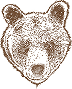 Bear artwork for our shirts and mugs