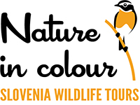 Nature in colour Slovenia wildlife tours logo