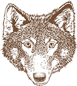 Wolf artwork for our mugs